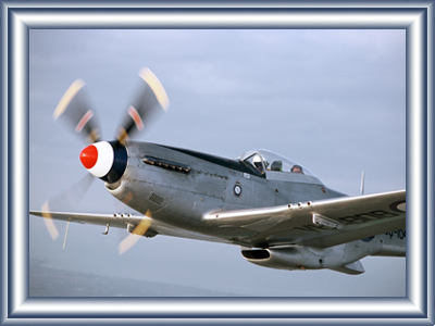 mustang-joy-flights4.png