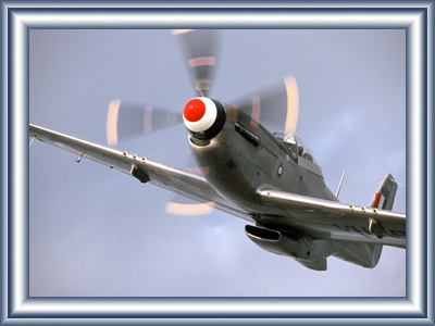 mustang-joy-flights6.png